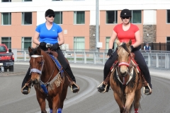Pace_Horses